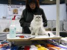 Saintly_City_Cat_Show_2006_043.jpg